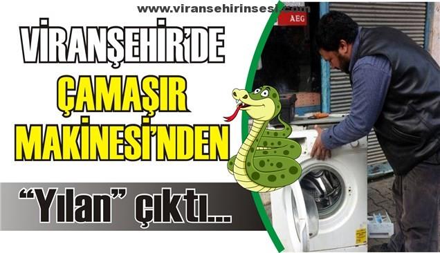 """Çamaşır Makinesinden """"Yılan"""" çıktı"""