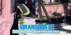 Viranşehir'de İtfaiye ekipleri 2 Duvar Arasında sıkışan köpeği kurtardı
