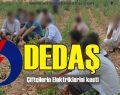 DEDAŞ Çiftçilerin Elektriklerini Kesti