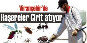 Viranşehir'de İlaçlama Yetersizliği