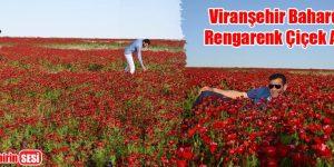 Viranşehir Baharda Rengarenk Çiçek Açtı