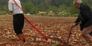 Şanlıurfa'da tarımın geldiği son nokta!