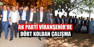 Ak Parti Viranşehir'de Dört Koldan Çalışma