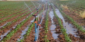Tarım Bakanından açıklama: Tarım ilaçlarında %15 indirim!